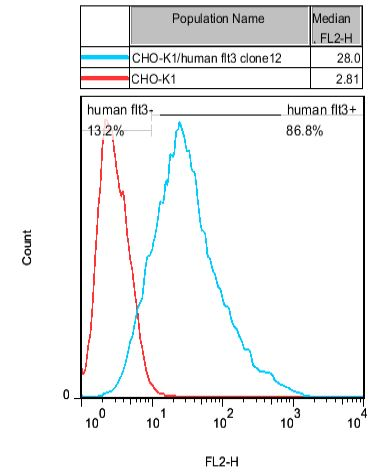 CHO-K1/human FLT3 Stable Cell Line