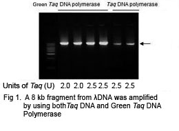 Green Taq DNA Polymerase