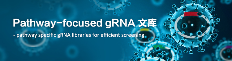 Pathway-focused CRISPR gRNA 文库