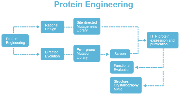 蛋白质二级结构预测