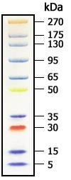 Protein Standard