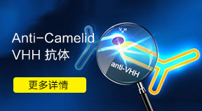 Anti-Camelid VHH 抗体